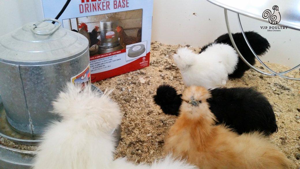 全自動養雞設備