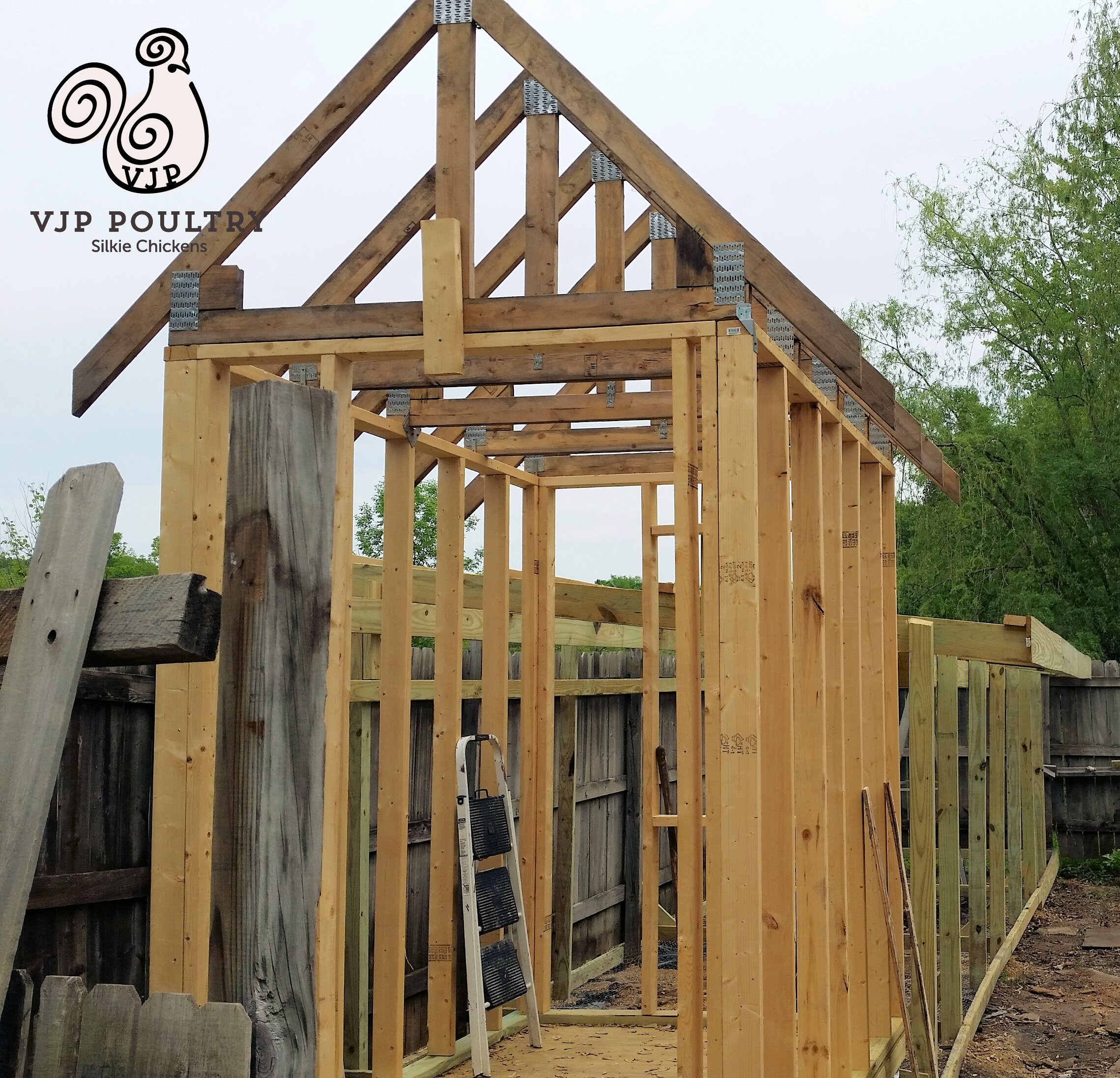Building A Coop For Silkie Chickens Vjp Poultry